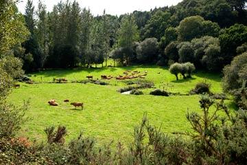 Visiter Plélo et sa campagne bretonne