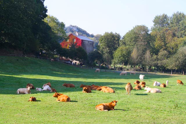 our farm with cows grazing